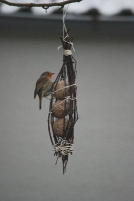 Die selbst gebastelten Futterspender aus Birkenreisig für Knödel ohne Plastiknetz fanden gleich Interessenten - hier ein Rotkehlchen.
