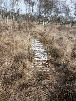 Auf schmalen Pfaden ging es durch das Moor.