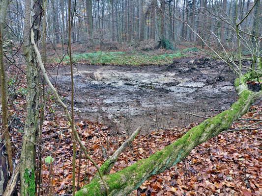 Nochmal ein Blick auf das sanierte Kleingewässer am Waldrand.