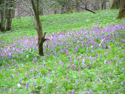 Frühling im Hangelstein (Foto: Wolfgang Stein)