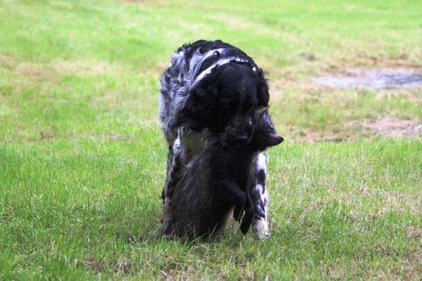 vW Arven von Königsdamm 218/11 mit Marderhund