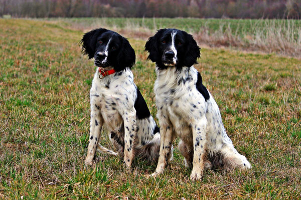 Dolly von Mentzelsfelde 190/15 mit Sohn Buster vom Brede 218/17 (Foto © kü)