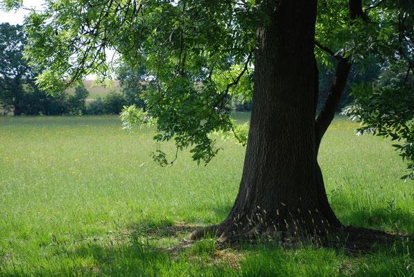 Walsumer Rheinaue