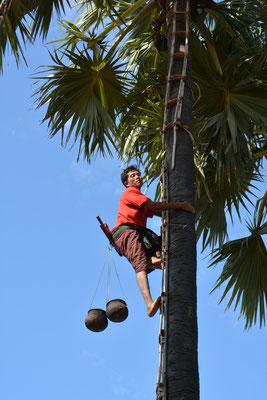 Bei der Palmsaft-Ernte