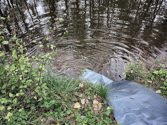 IG-Kinzig Herbstbesatz Oktober 2017 / Hecht, Karpfen, Schleie