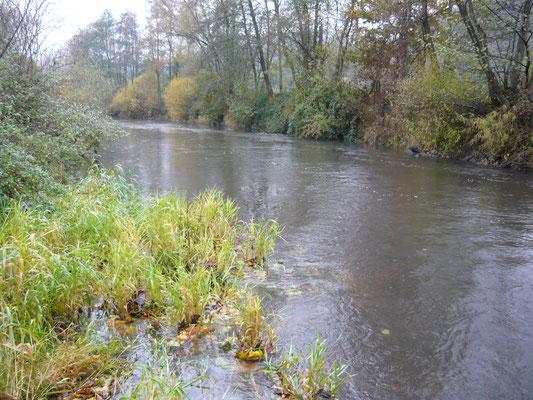 IG-Kinzig / Die hessische Kinzig / Reiseberichte eines Fliegenfischers