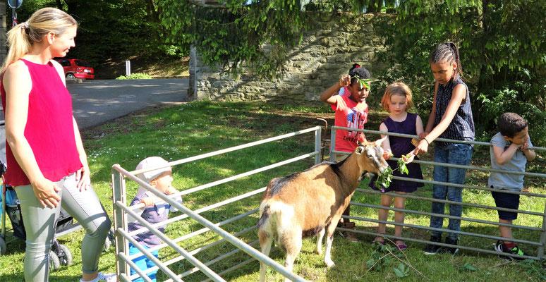 Ein kleiner Streichelzoo mit Ziege, Schafen und Lämmern ließ Kinderherzen höher schlagen. Foto: Jennifer Peppler