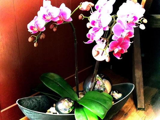 モダンスタイル胡蝶蘭 舟形 参考価格9,500円(花色やご予算ご希望に応じてお作りできます)
