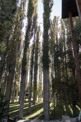 Park in Khorog.
