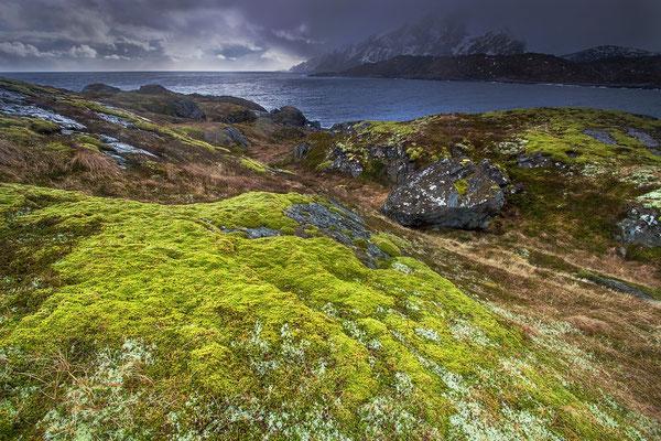 Nesland - Skjelfjorden