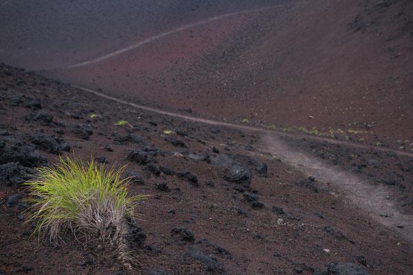 Vulkanwüste auf Faial - Capelinhos
