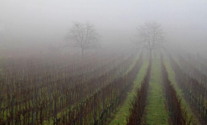 Paradiesgarten im Nebel
