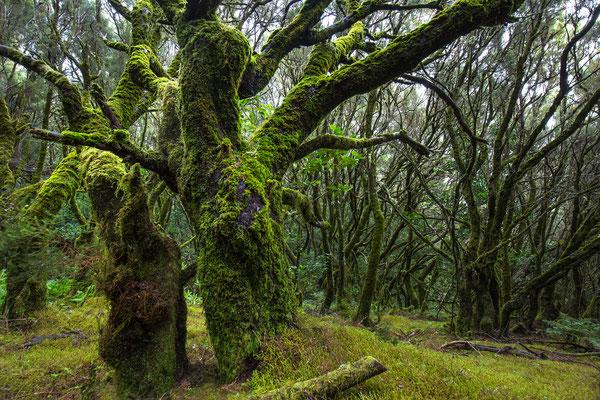 Parque National de Garajonay 1
