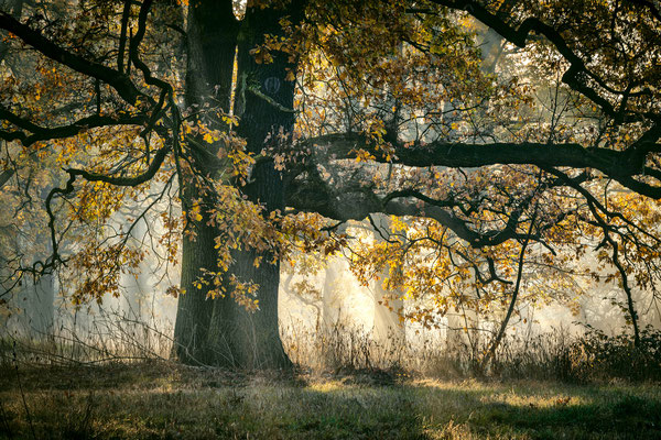 Oktober - Vorderer Tiergarten
