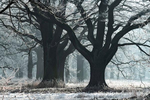 Dezember - Vorderer Tiergarten