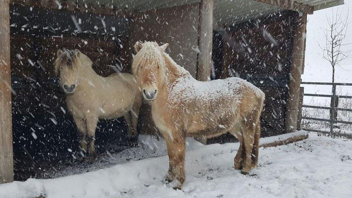 Björn und Idar