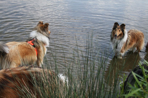 Blickduell der Schwestern: Calina und Crispy