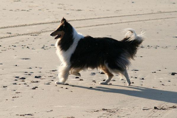 Klara hat einen Strandsurfer entdeckt!