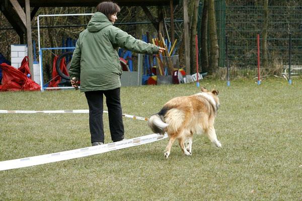 Am Anfang bleibt der Hundeführer dicht beim Hund