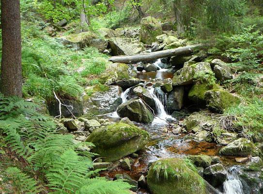 Urwald im Naturpark Harz