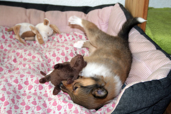 Dastan & die Ratte :)