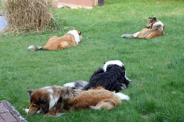 Zufriedene Knochen-Kau-Runde im Garten