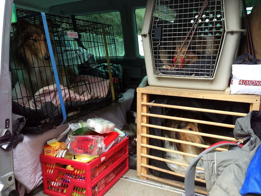 Mein VW-Bus war mit den 5 Hunden, zwei Personen und Gepäck gut gefüllt :)