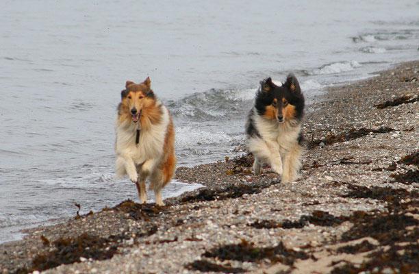 Und die Hunde auch: Da musste man vom Strand aus das Hüten übernehmen