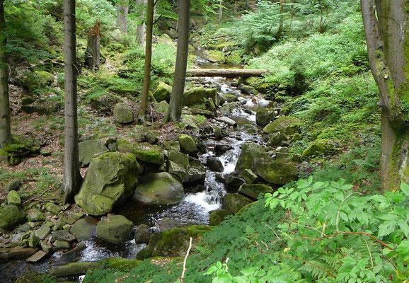 Überall ist Wasser; der Harz ist durchzogen von Bächen und kleinen Flüssen