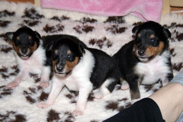 v.li.: Djuli,Dizzy, Darian