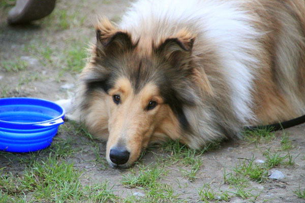 Lennox, auch müde :)