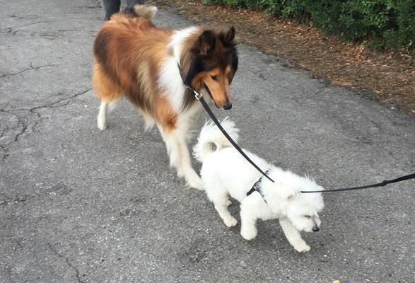 Der neue beste Freund Luki♥
