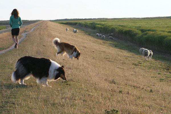 Feine Schafe! Können wir die nicht mitnehmen?