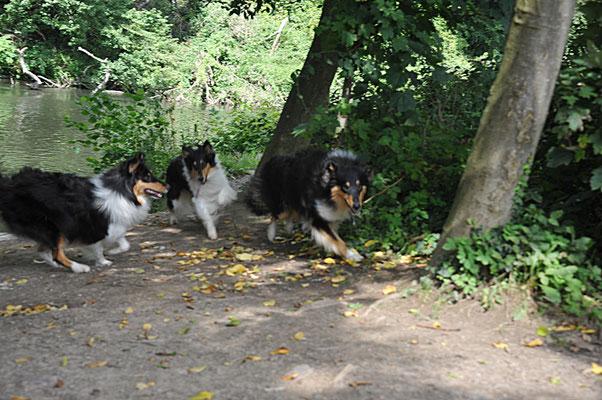 Mika, Biscuit und Milos