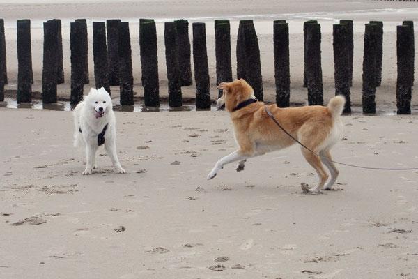 Lauter nette Hundekontakte :)