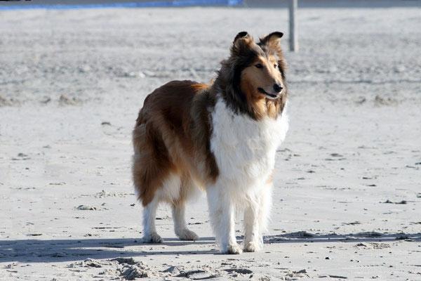 An ihrem 7. Geburtstag am Strand von Norderney