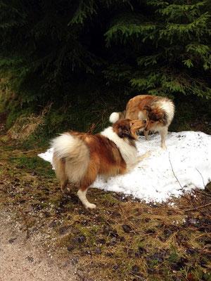 Crispy und Liam haben riesigen Spaß in dem kleinen Schneerest