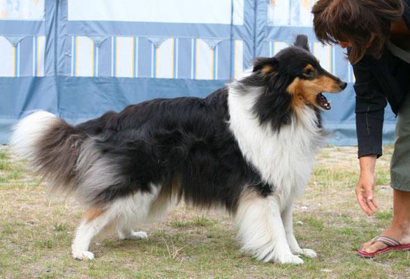 Kampfhund Klara