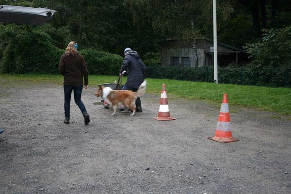 Pino wollte dann doch lieber laufen ;)