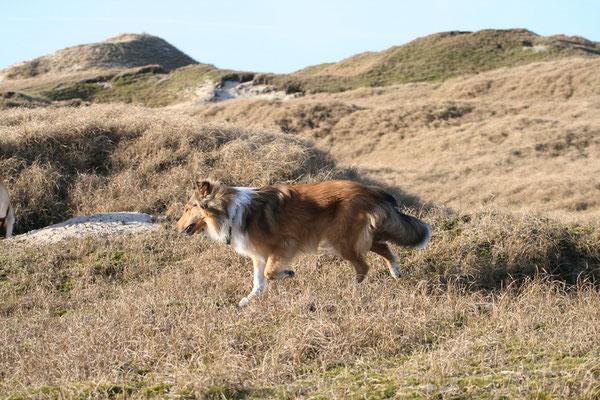 """Szene aus """"Lassie kehrt heim"""" ;-) Norderney"""
