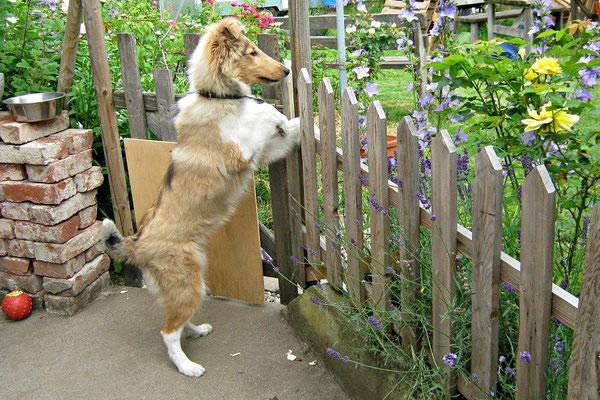 Ob der Zaun sie lange aufhält? ;) Dank der Gene ihrer Mama sicher nicht! :))
