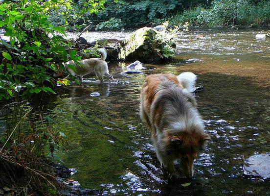 Wasser für die Hunde braucht man im Harz definitiv nicht mitschleppen