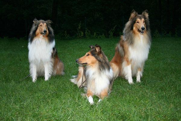 Die angereisten B-chen Timmy (Bryson), Boots (Bree) und Lennox (Balou)