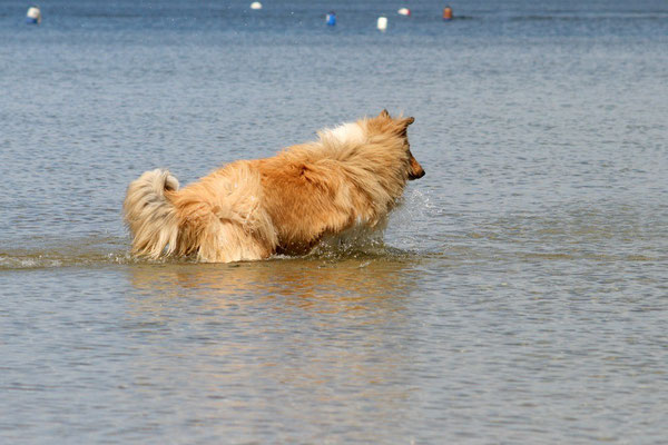 Seehund Bailey :-)