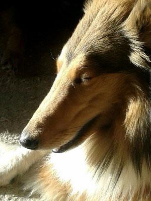 Pino genießt die Dezembersonne :)
