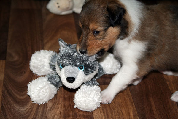 Daenerys & der Wolf :)