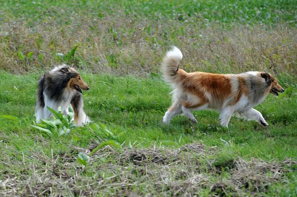 Crispy und Bailey