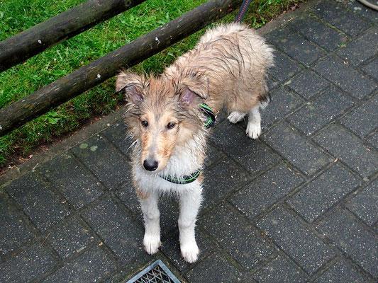 Selbst im Regen muss ich raus! Ist das ein Hundeleben ;)