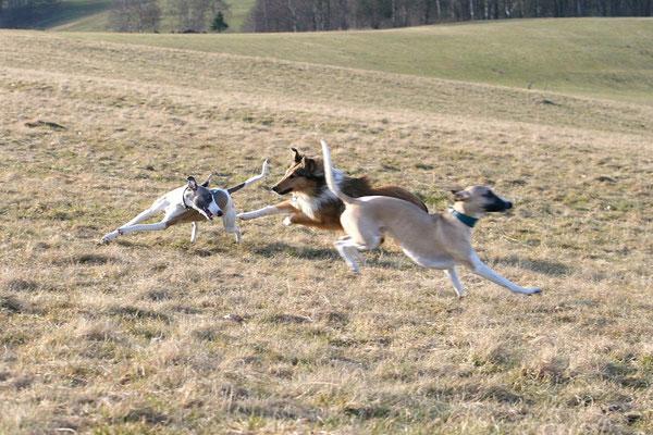 Wenn Kedi dabei ist, sind alle anderen Hunde incl. Collies (!) Luft für Boots :-)