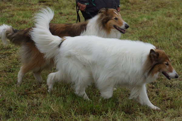 Calina's Gefährten Jasper und Meggy